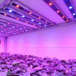 Светодиодное освещение для цветов