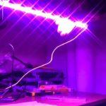 Светодиодные светильники для растений – прорыв для аграриев!